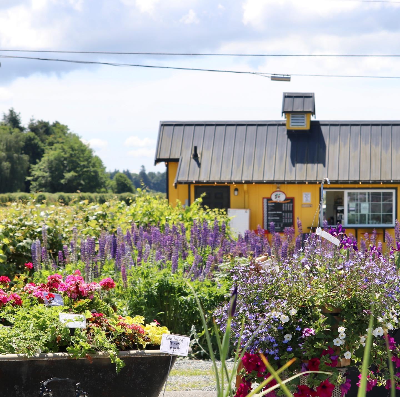 Visit Skagit's farm stands_Schuh Farms in Mount Vernon, Washington_Farmstand Fresh