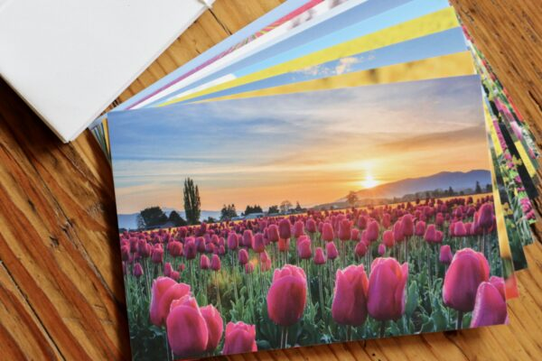 Tulip cards or postcards photography by Nancy Crowell